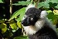 Lemur (26245100019).jpg