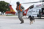 Lending a paw, Coast Guard helps Air Force military working dogs get acclimated 160729-G-RD053-050.jpg