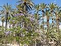 Les palmiers et les arbres bleus de elche - panoramio.jpg