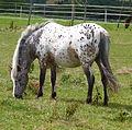 Lichtenwald Pony.jpg