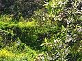 Lifta spring - panoramio (3).jpg