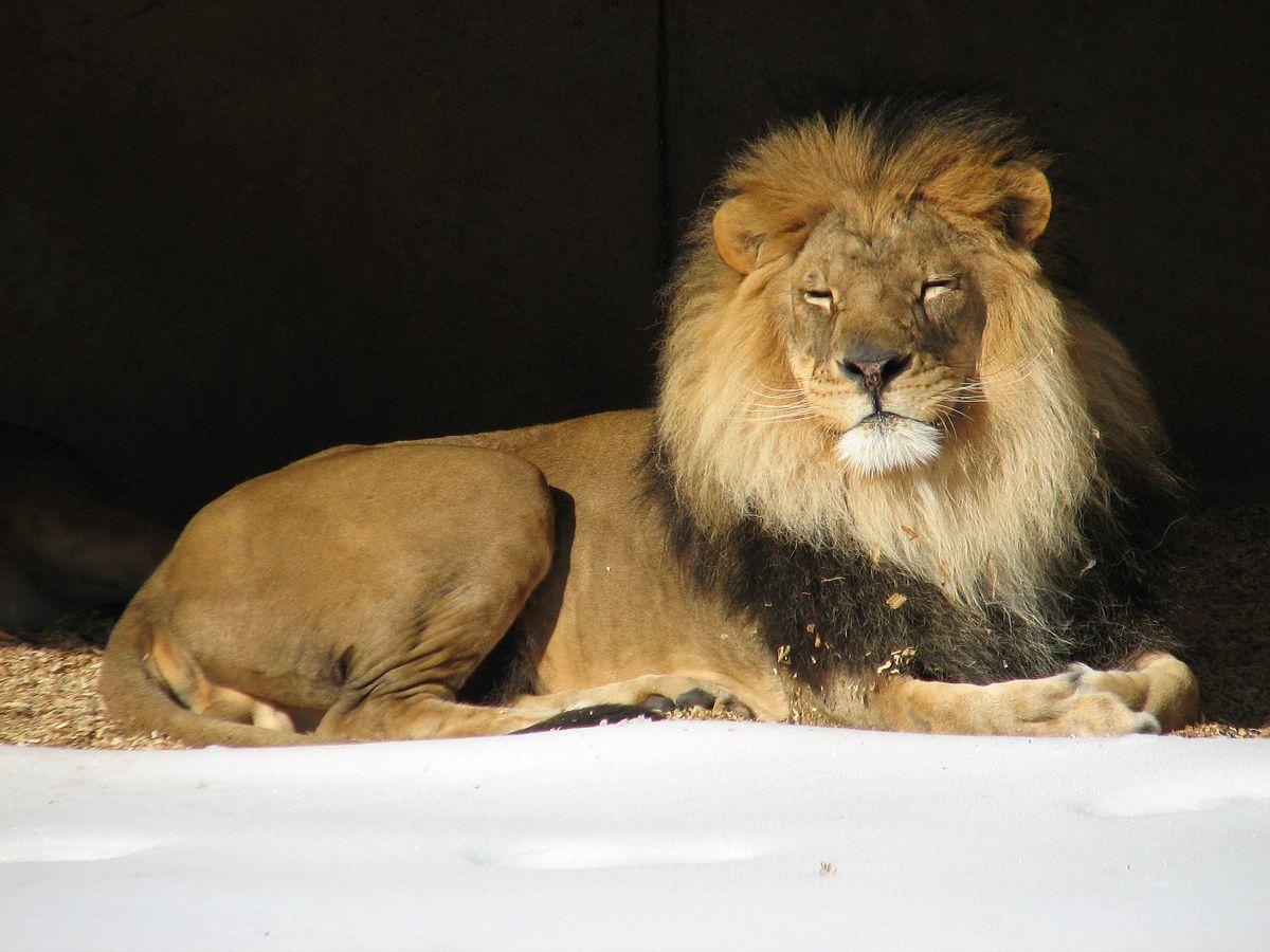 León (color) - Wikipedia, la enciclopedia libre