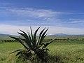 Llanos de Apan.jpg