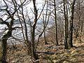 Loch Rannoch shoreline - geograph.org.uk - 376691.jpg