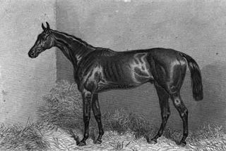 Lord Clifden British-bred Thoroughbred racehorse