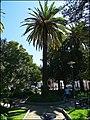 Loule (Portugal) (50390649153).jpg