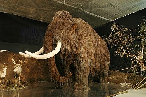 500px lovci mamutu mammoth