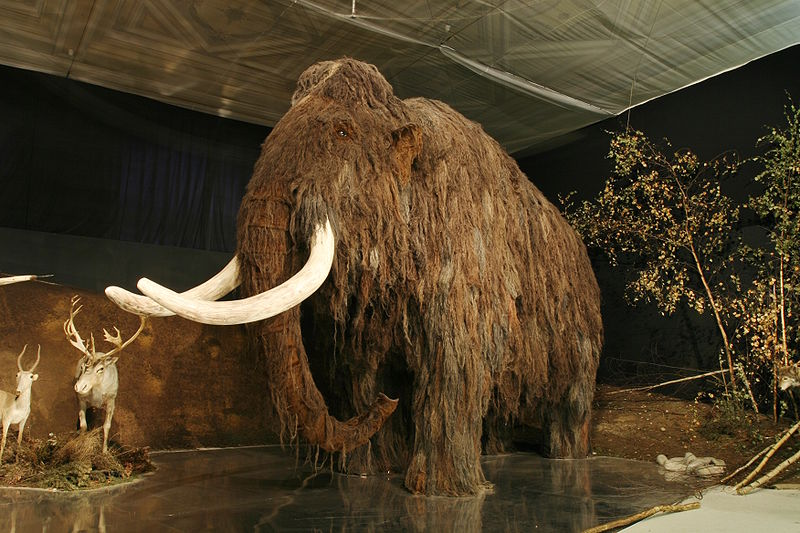 Lovci mamutu mammoth