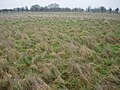 Lowland Acid Grassland - geograph.org.uk - 305395.jpg