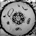 File:MRI scan of the sea urchin Psammechinus miliaris (Müller, 1771) - 1741-7007-6-33-S4.ogv