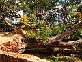 Madagascar Rova ambohimanga courtyard cyclone Giovanna damage.JPG