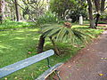 Madeira em Abril de 2011 IMG 1725 (5663183461).jpg
