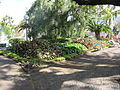 Madeira em Abril de 2011 IMG 1771 (5663783842).jpg