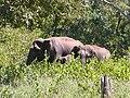 Madumalai wildlife sanctuary - panoramio.jpg