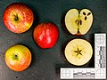 Magenta (Apfel) jm94409.jpg