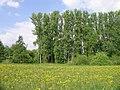 Mainauen Sulzbach 09.jpg