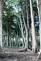 Mangrove Jungles.jpg