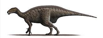 Mantellisaurus - Restoration based on the holotype specimen, NHMUK R5764.