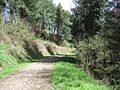 Marked Forest Trail, Eggesford - geograph.org.uk - 162524.jpg