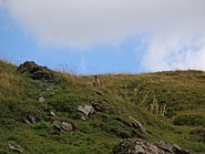 Marmot Aosta 04
