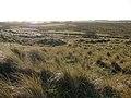 Marram grass glistening in the sunshine - geograph.org.uk - 1083415.jpg