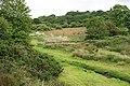 Marshland in the Carnon Valley - geograph.org.uk - 845411.jpg