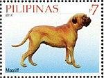 Mastiff-Canis-lupus-familiaris.jpg