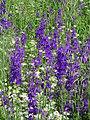 Mešovite zajednice zeljastih biljaka na Lalinačkoj slatini.jpg