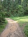 Mežs aiz Ogres meža tehnikuma - panoramio (3).jpg