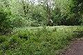 Meadow in Brotherton Park.jpg