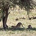 Meatu, Tanzania - panoramio (9).jpg