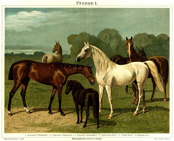 List Of Horse Breeds Wikiwand