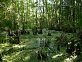 Mississippi Delta, USA (14409610326).jpg