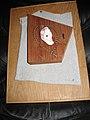 Mixed-media-Good Ear-wire, shell, cotton tank top, redwood, oak ply.jpg
