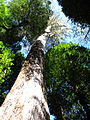 Mixed forest tasmania.JPG