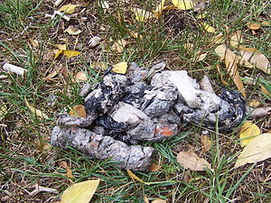Feces - Bear scat showing consumption of bin bags in garbage