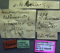 Monomorium herero casent0101739 label 1.jpg