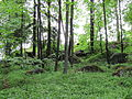 Monrepos. Rocks in the Forest.jpg