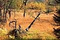 Moor im Ochsenbruch im Nationalpark Hunsrück-Hochwald.jpg