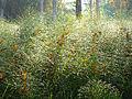 Morning dew (15444856668).jpg