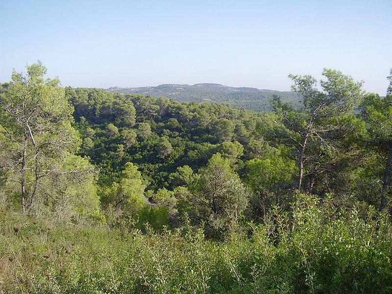 MountCarmel24.jpg