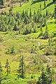 Mount Rainier - Paradise - looking south from Waterfall Trail - August 2014 - 03.jpg
