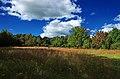Mountaintop Meadow (4) (8017818791).jpg