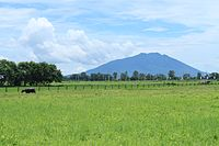Mount Arayat National Park
