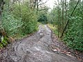 Muddy Track in the Woods - geograph.org.uk - 1597231.jpg