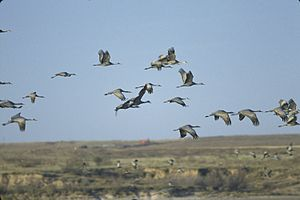 Muleshoe National Wildlife Refuge