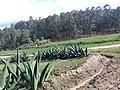 Nanacamilpa Forest, Tlaxcala, Mexico 06.jpg