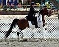 National Show Horse1.jpg