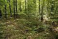 Naturdenkmal Dolinenketten Oberer Wald (4 Dolinen), Kennung 81150100016 04.jpg