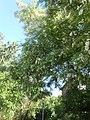 Nature in Smolensk - 72.jpg